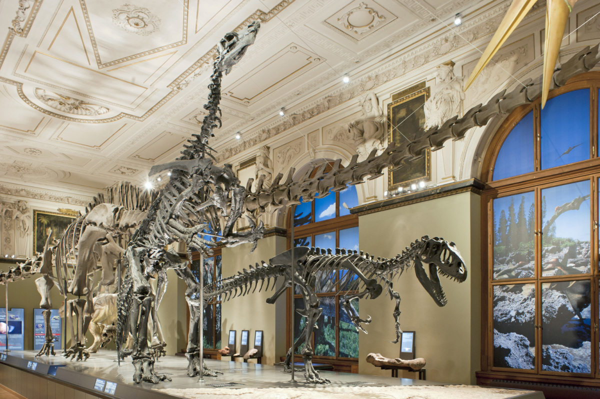 Dinosaur hall in the Museum of Natural History, Vienna.