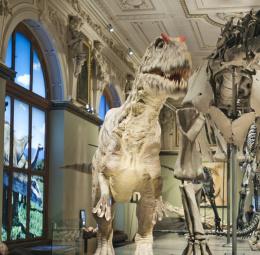 Saurier-salen på Naturhistoriska museet i Wien
