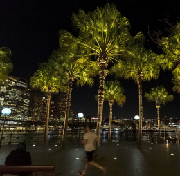Palm Trees, Circular Quay, Sydney