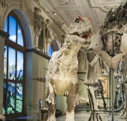 Dinosaur Hall at the Museum of Natural History Vienna