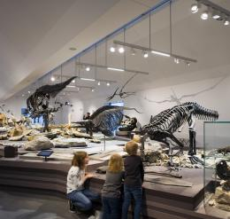 Natural History Museum, St. Gallen